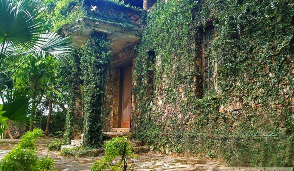 jungle_house_bac_ninh