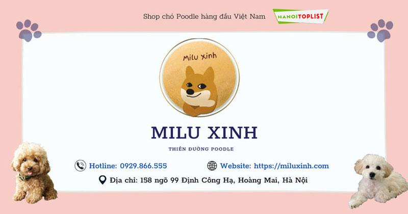 shop-cho-poodle-tai-ha-noi-milu-xinh-hanoitoplist