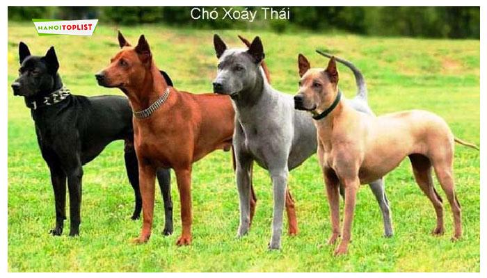 trai-cho-xoay-thai