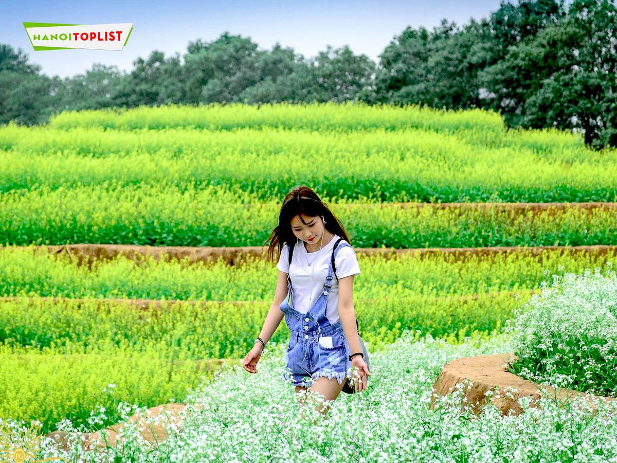 canh-dong-hoa-ruong-bac-thang-1