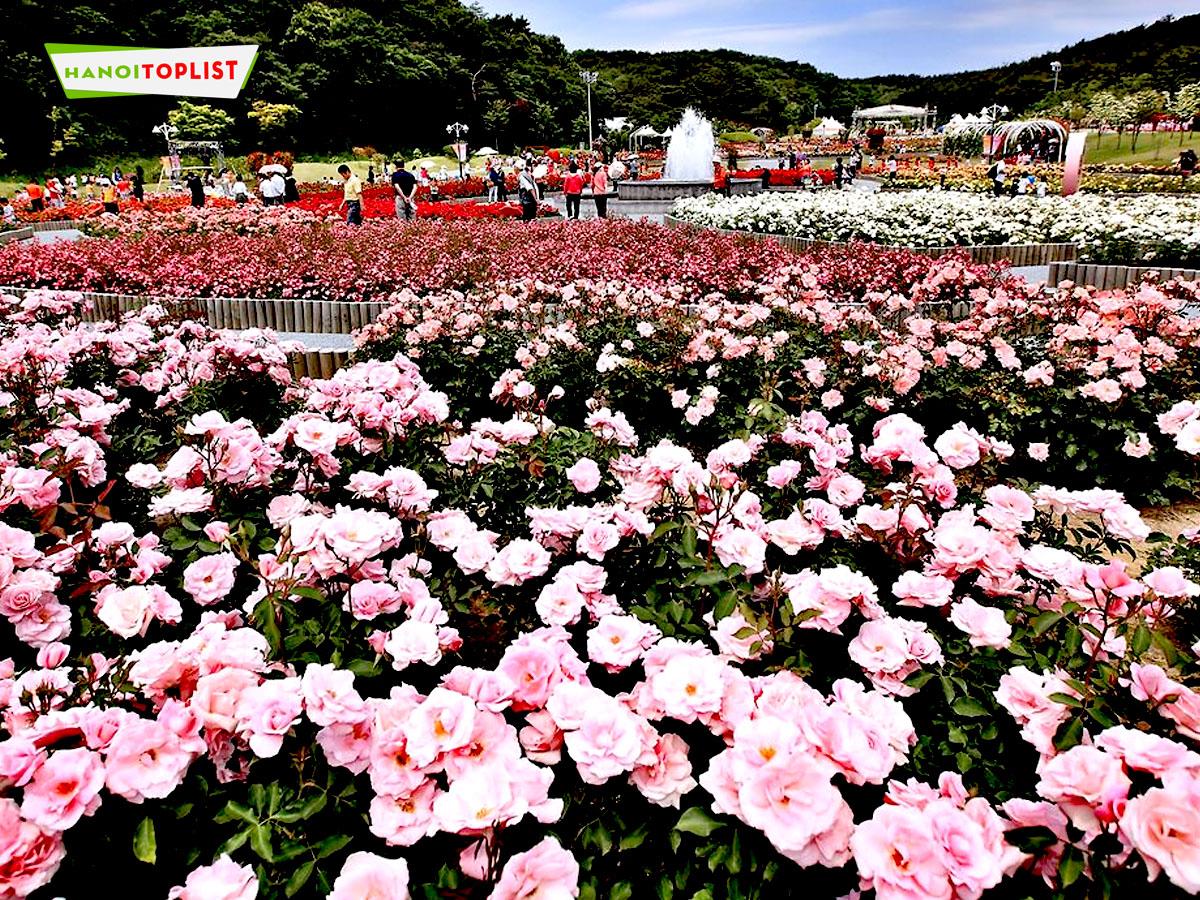 cong-vien-hoa-hong-rose-park-1