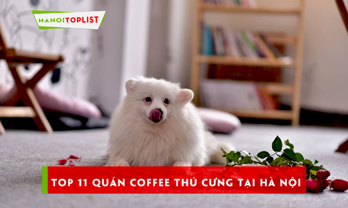 top-11-quan-coffee-thu-cung-tai-ha-noi-ban-nen-thu-qua