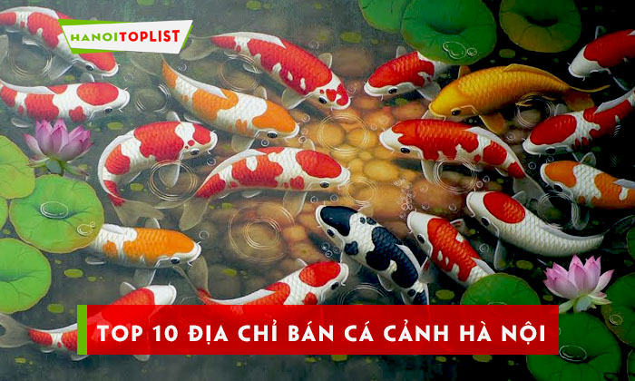 top-10-dia-chi-ban-ca-canh-ha-noi-chat-luong-gia-re
