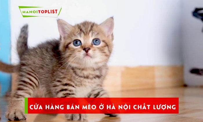 kham-pha-10-cua-hang-ban-meo-o-ha-noi-sieu-chat-luong