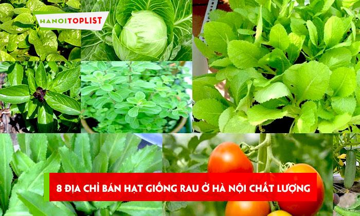 top-8-dia-chi-ban-hat-giong-rau-chat-luong-mien-ban-o-ha-noi