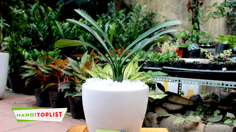 cong-ty-cay-xanh-hong-duong-ha-noi-hanoitoplist