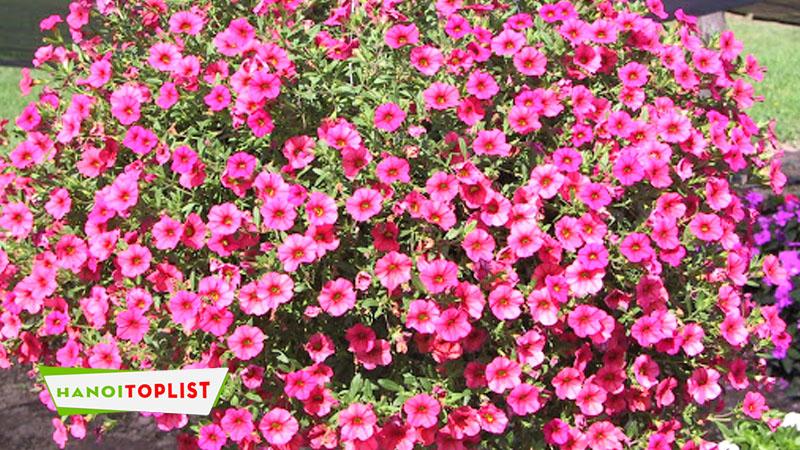 mimi-flowers-hanoitoplist
