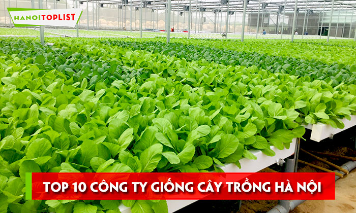 top-10-cong-ty-giong-cay-trong-ha-noi-uy-tin-nhat-hanoitoplist