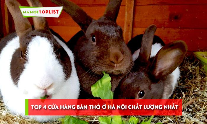 top-4-cua-hang-ban-tho-o-ha-noi-chat-luong-nhat