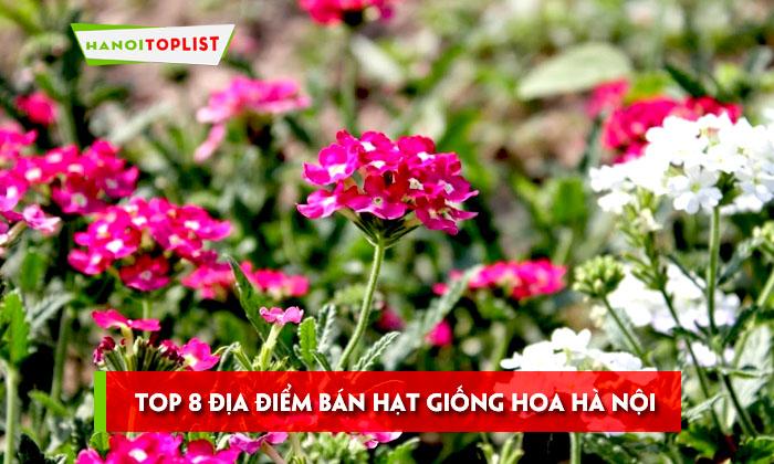 top-8-dia-diem-ban-hat-giong-hoa-ha-noi-chat-luong-nhat