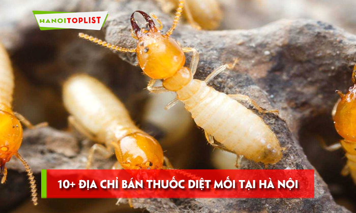 10-dia-chi-ban-thuoc-diet-moi-tai-ha-noi-hieu-qua-nhat
