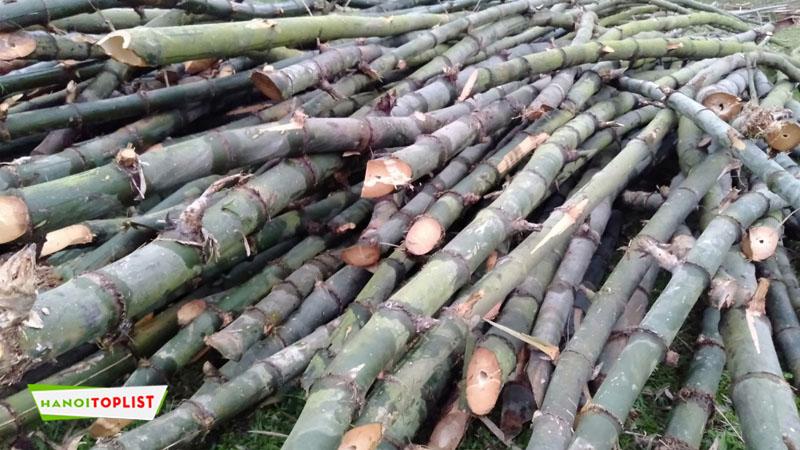 tre-truc-bamboo-viet-hanoitoplist