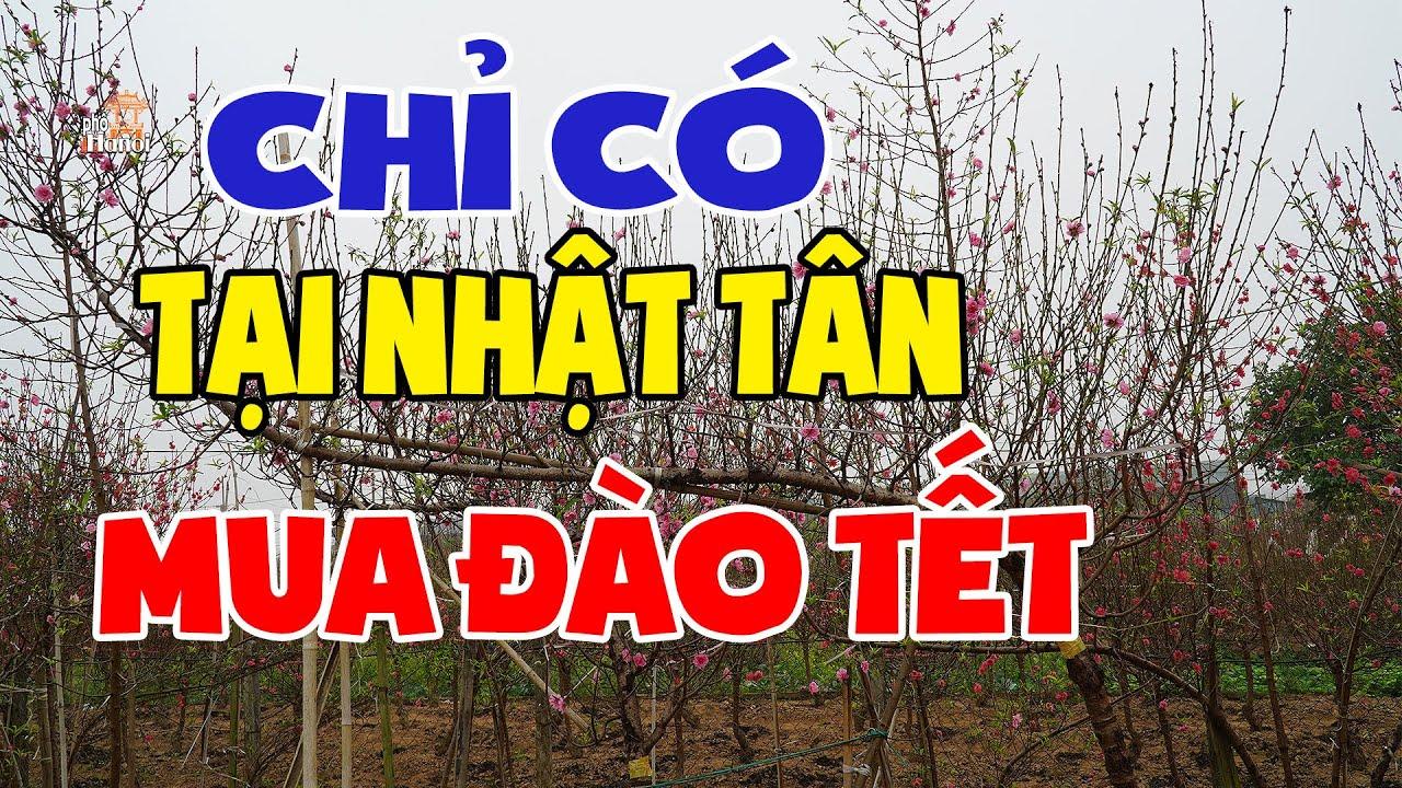 Chọn thế đào Tết chỉ có tại Nhật Tân đã sẵn sàng cho Tết Canh Tý #hnp