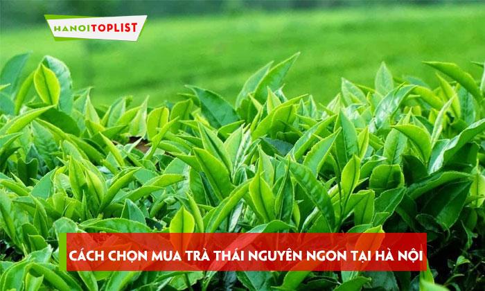 cach-chon-mua-tra-thai-nguyen-ngon-tai-ha-noi