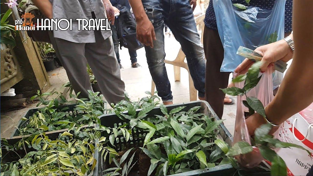 Chen nhau trả giá mua Rau Sắng Chùa Hương đặc sản núi rừng #hnp