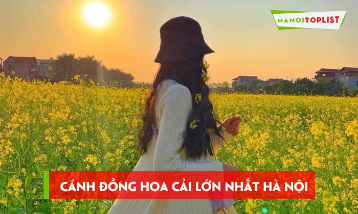 canh-dong-hoa-cai-lon-nhat-ha-noi-vao-cua-free