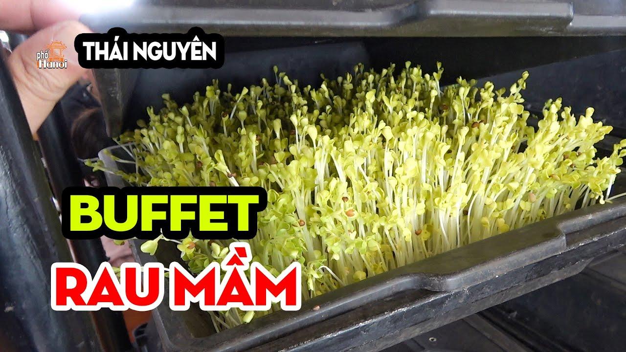 Vì Sao Nhà hàng ATK Có Buffet Rau Mầm Ngon Rẻ Nhất Thái Nguyên #hnp