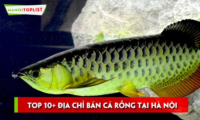 top-10-dia-chi-ban-ca-rong-tai-ha-noi-dep-gia-re
